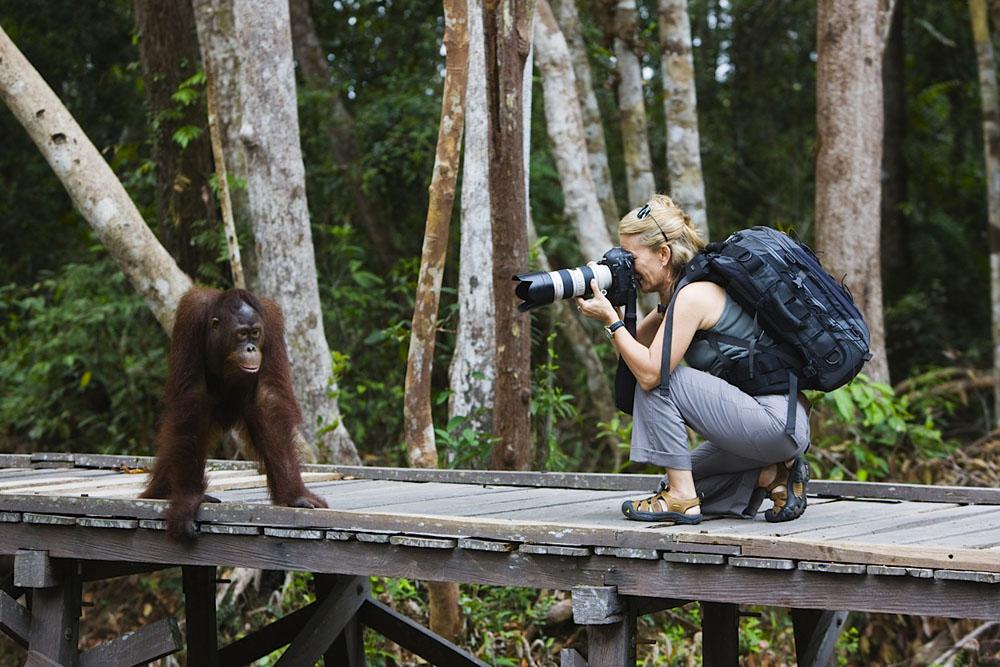 Photographer Jami Tarris photographing orangutan
