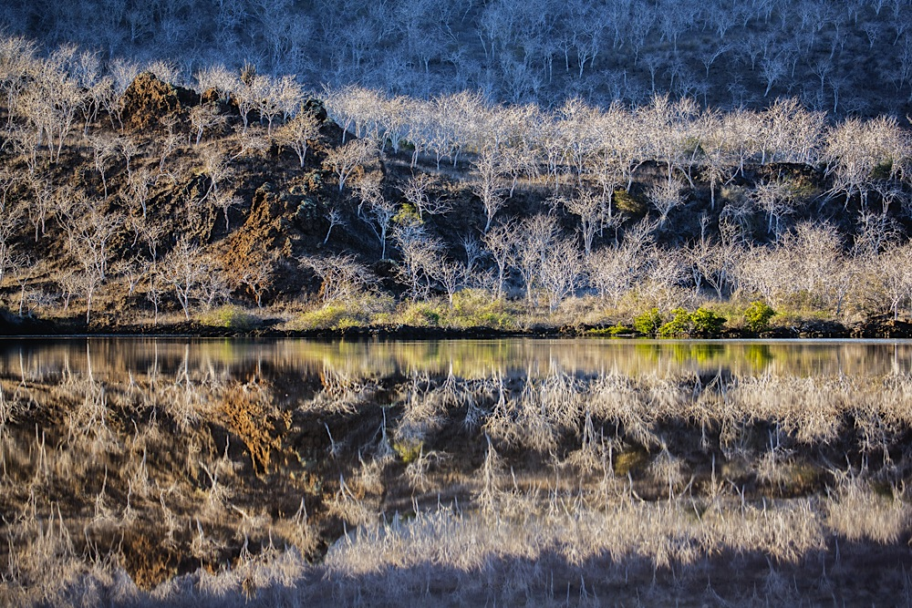 Reflection of trees in a cove on Isabela Island