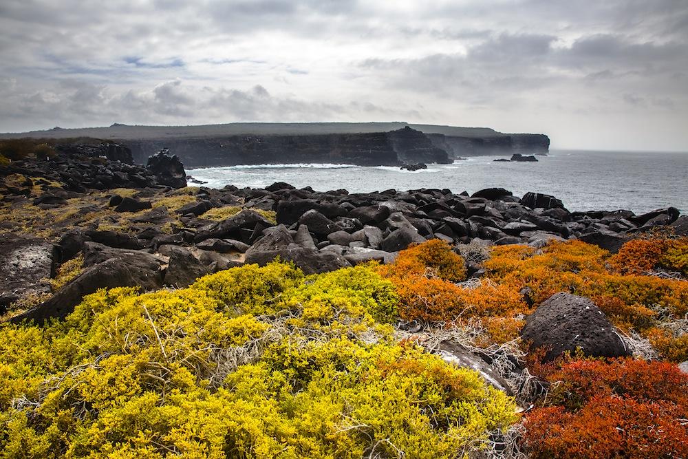 Tarris_Galapagos_11_2016_4735