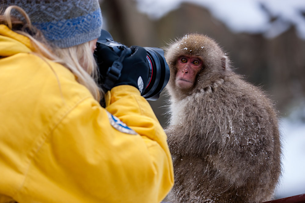 Jami Tarris photographing young snow monkey