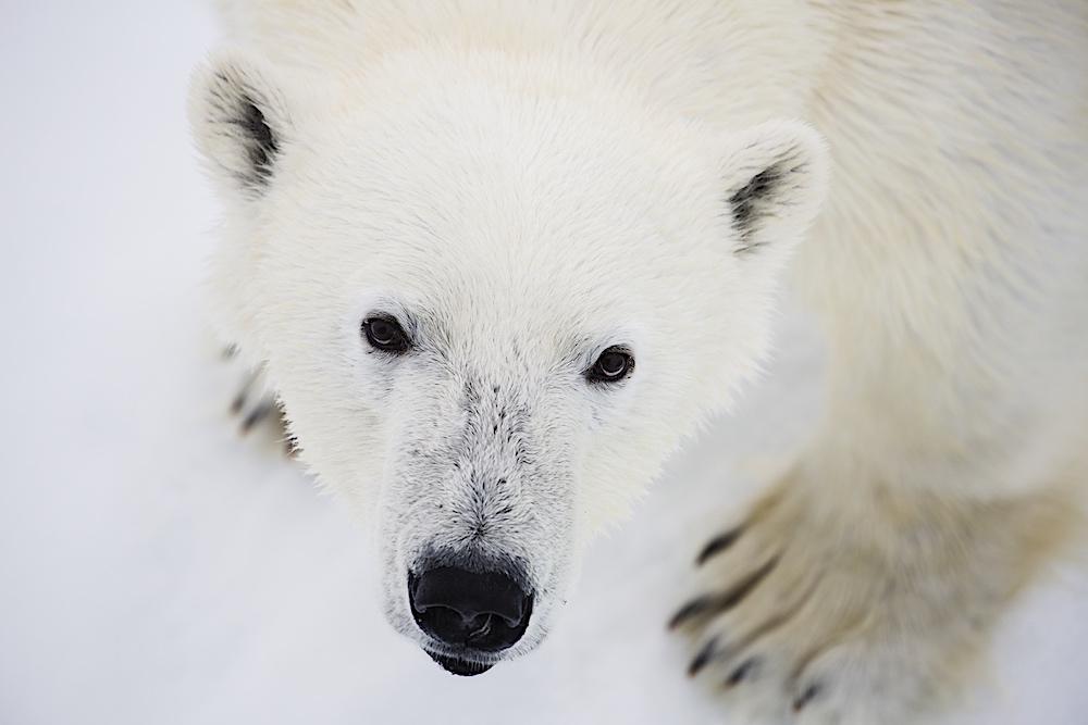 Tarris_Svalbard_05_2016_0897 copy
