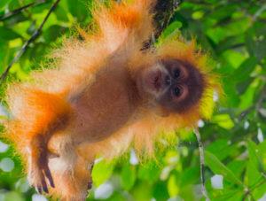 Tarris_Sumatra_Tapanuli_BitaBitang_0026