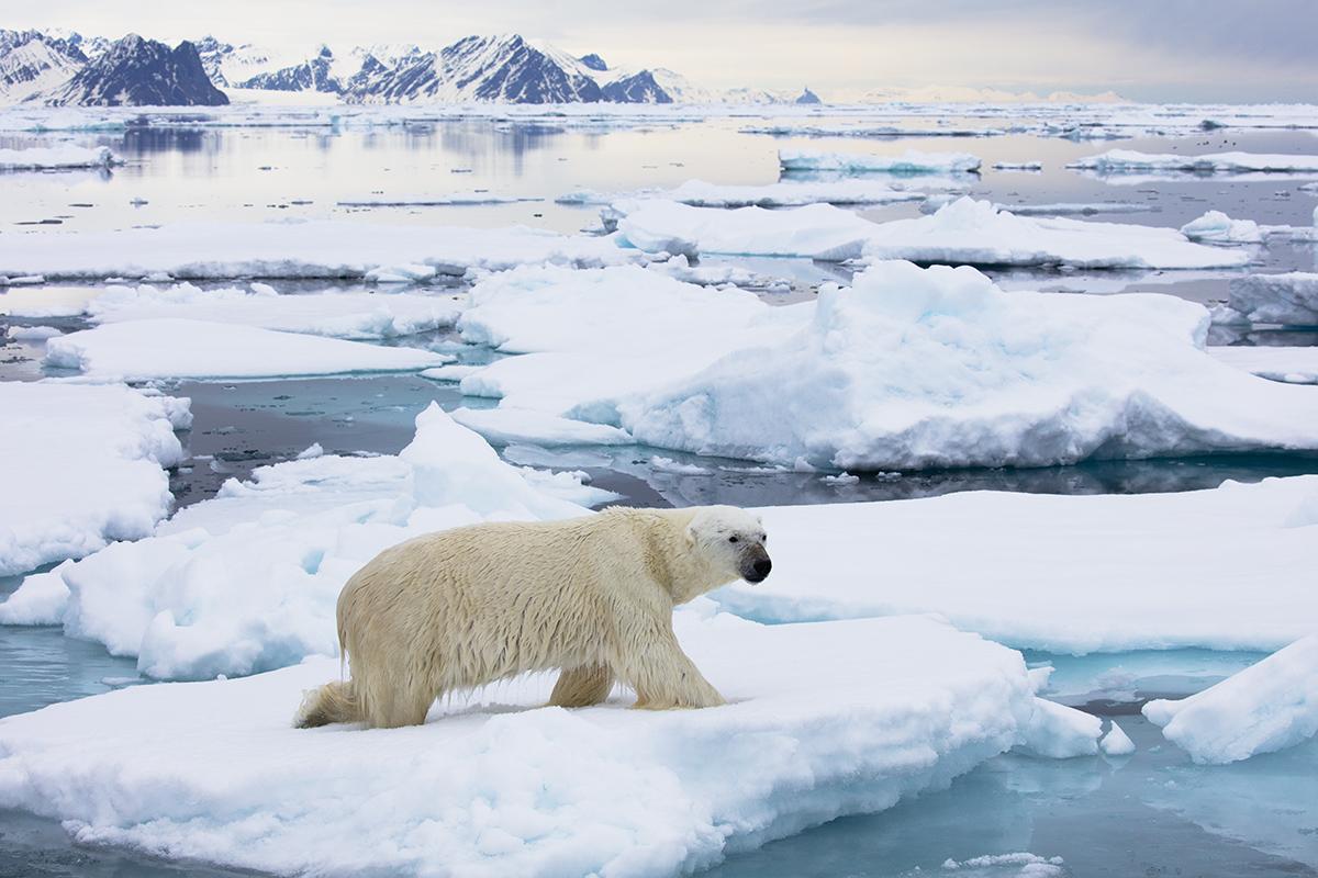 Svalbard_Allofs_2019_06_0821