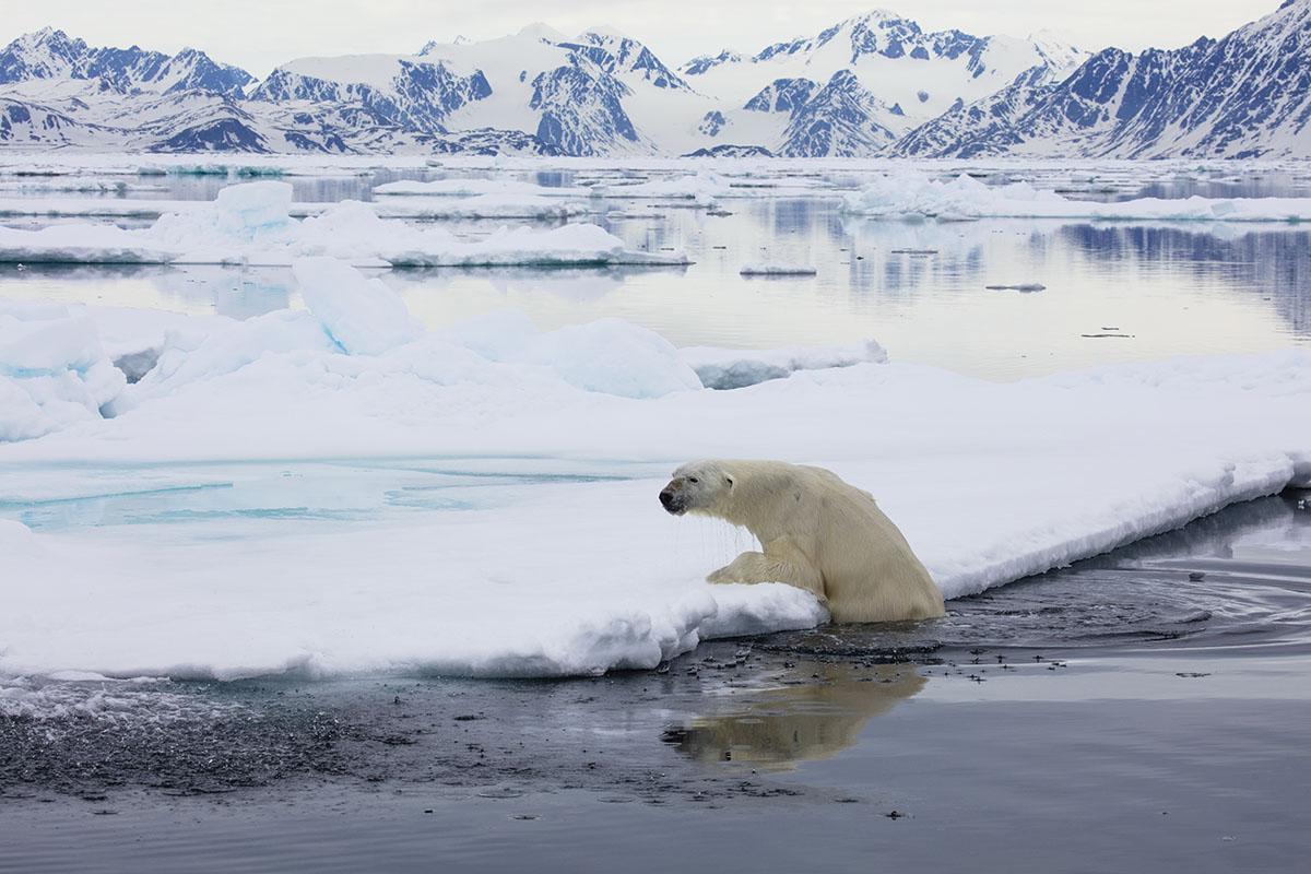 Svalbard_Allofs_2019_06_0945