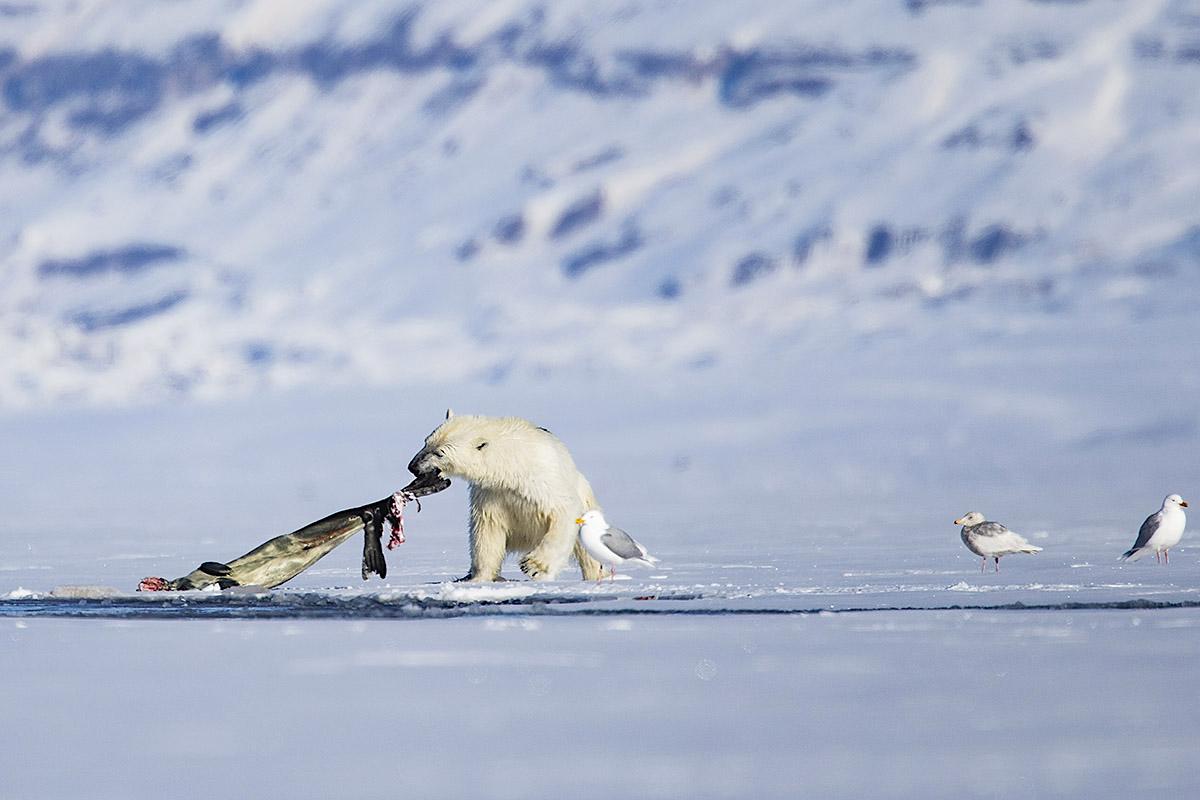 Tarris_Svalbard_05_19_1661