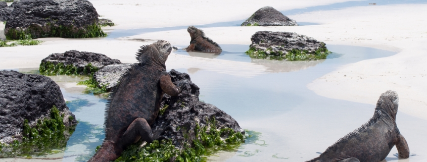 galapagos featured article