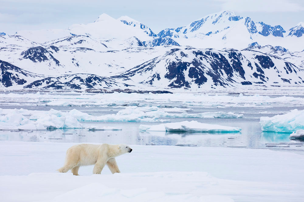 Svalbard_Allofs_2019_06_2217