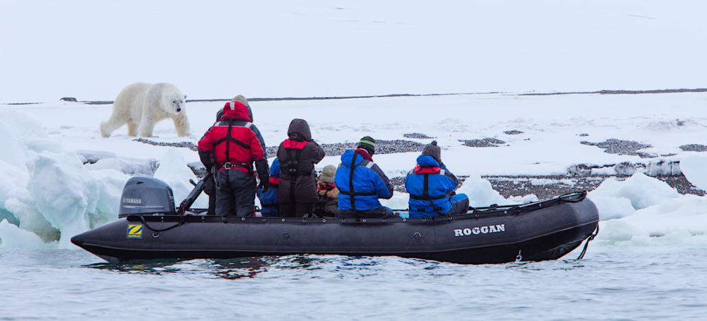 Tourists watching polar bear