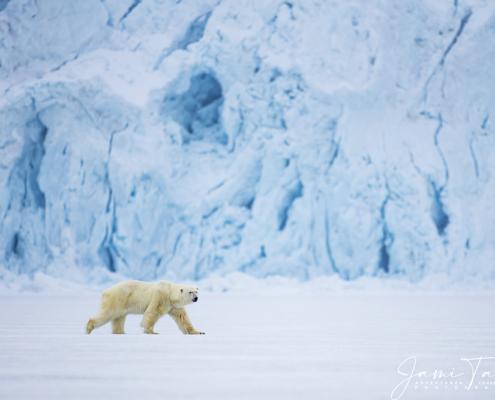 Tarris_SvalbardFreya_05_2016_5687