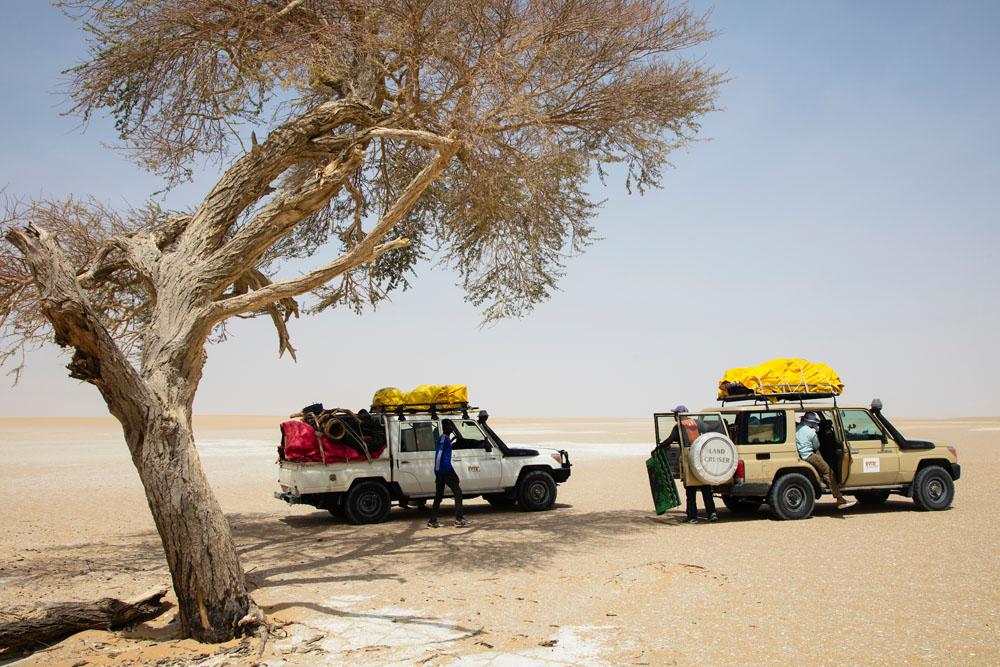 Tourist vehicle s under acacia tree